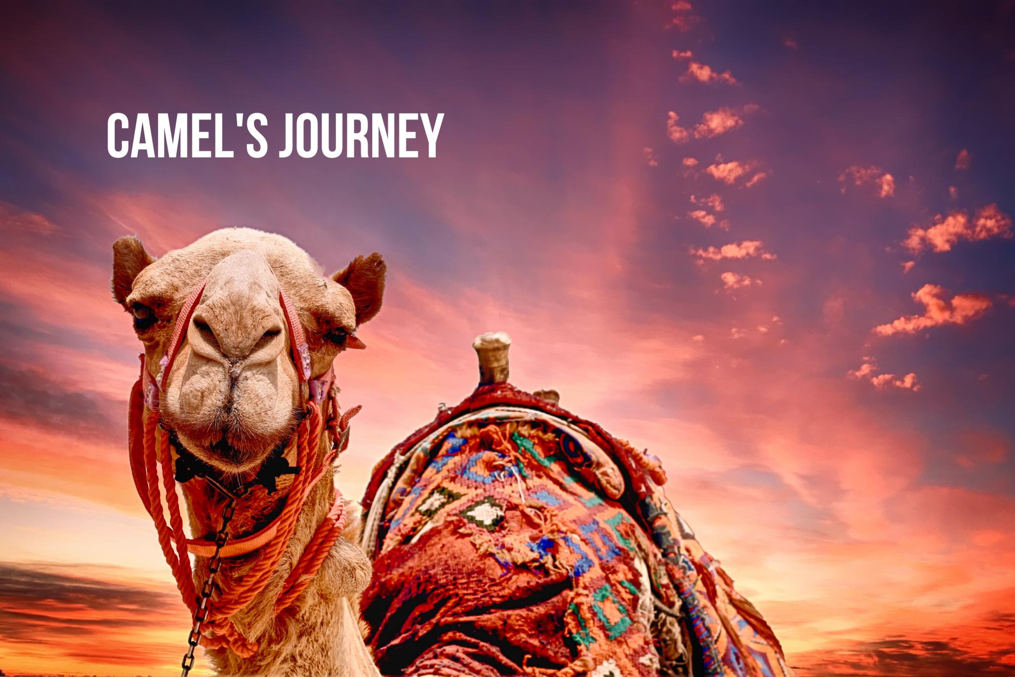 Camel's Journey (2011)